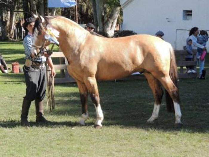 Exposición de caballos criollos - ON24   Información ...